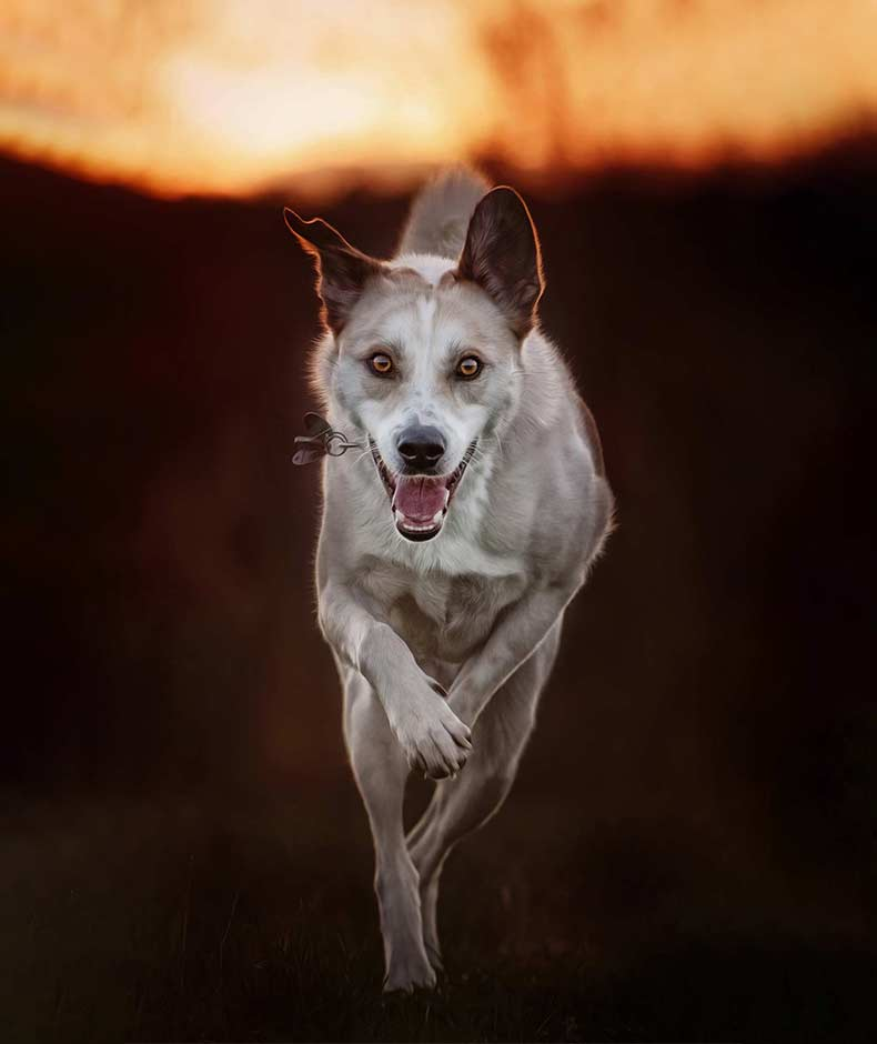 True-Creative-Agency-Hundefotografie-12-1