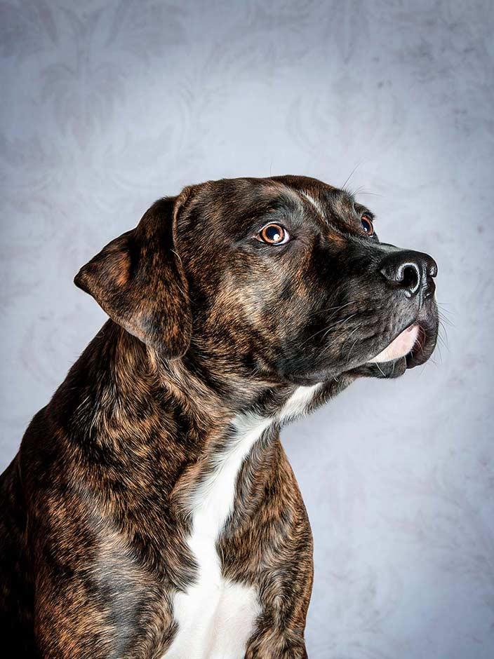 True-Creative-Agency-Hundefotografie-2-1